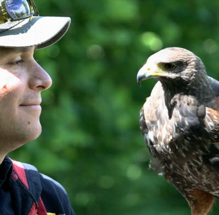 Events at Aillwee Cave and Birds of Prey Centre